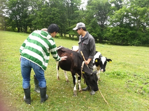 牛追い体験2019-1