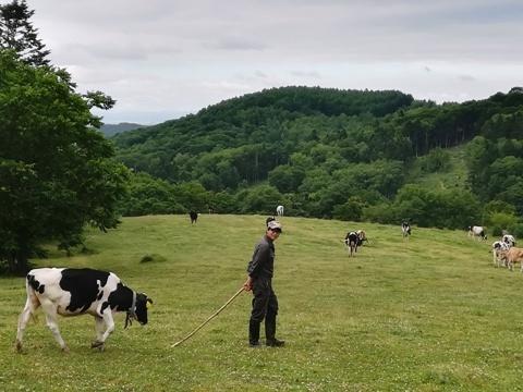 牛追い体験2019-2