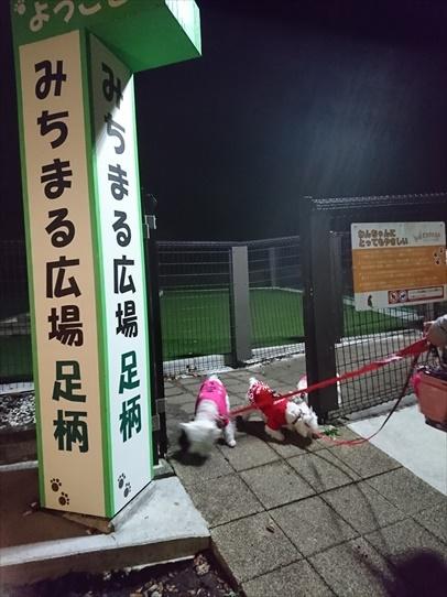 ashigarasa.jpg