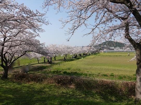 fujiwarakyuseki1.jpg