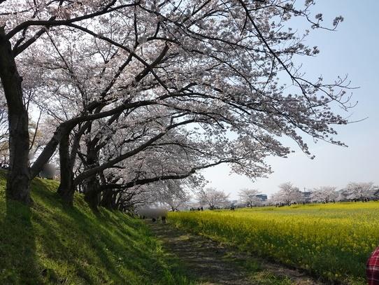 fujiwarakyuseki7.jpg