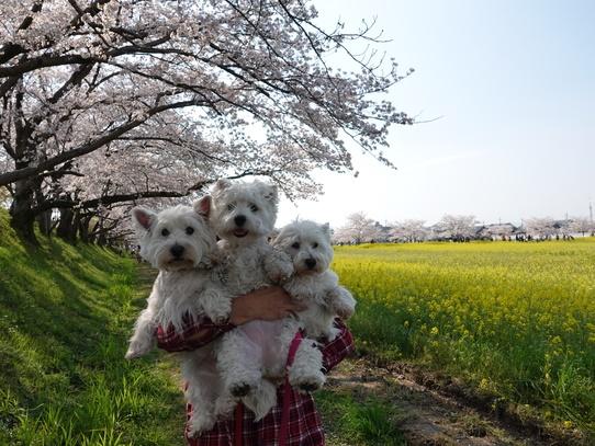 fujiwarakyuseki8.jpg