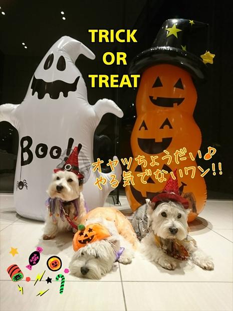 halloween1_2019103114463931c.jpg