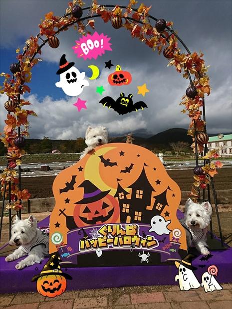 halloween2_20191031144638e73.jpg