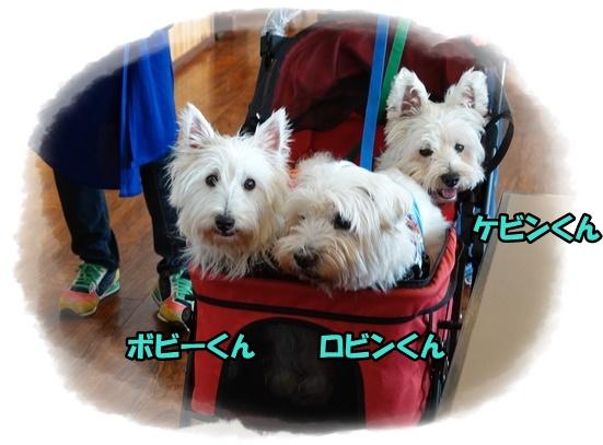 itoshima14.jpg