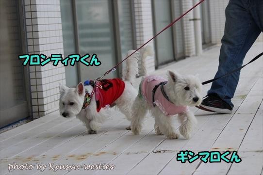 itoshima38.jpg