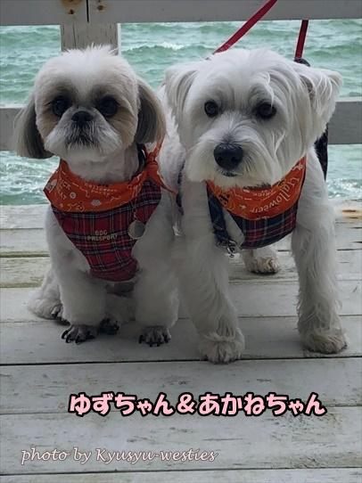 itoshima40.jpg