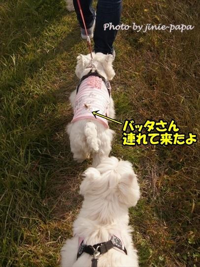kosumosu3_20191217143039fbb.jpg