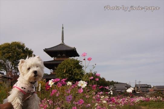 kosumosu8_20191217144724799.jpg