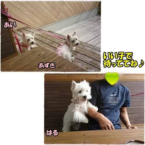 nagasaki7.jpg