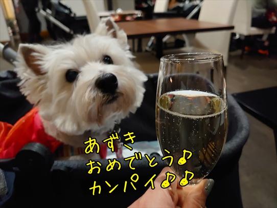 oiwairyokou21.jpg