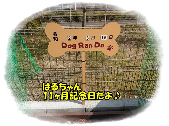 run1_20200324181641d46.jpg