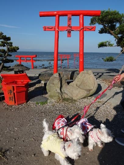 torii4.jpg