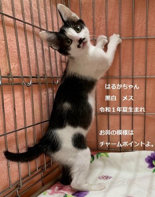 haruka1 (2)