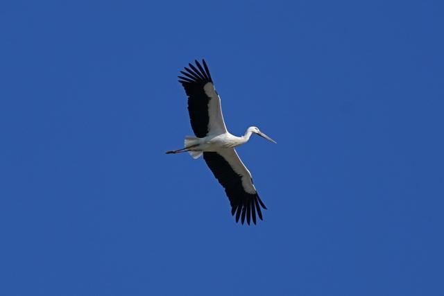 200101野鳥4