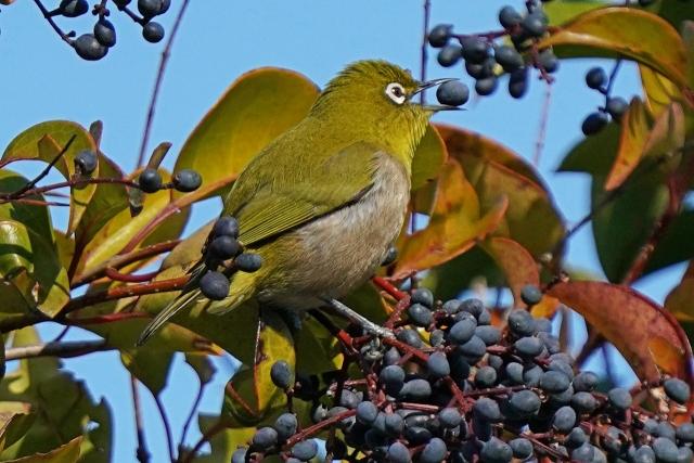 200101野鳥14