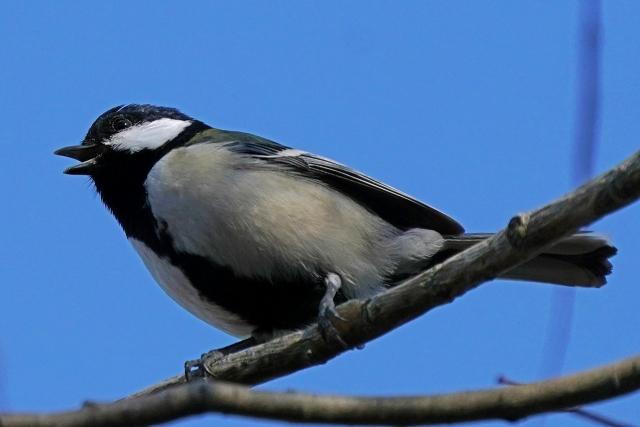200101野鳥16