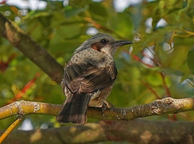 200101野鳥18