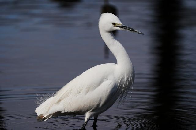 200101野鳥20