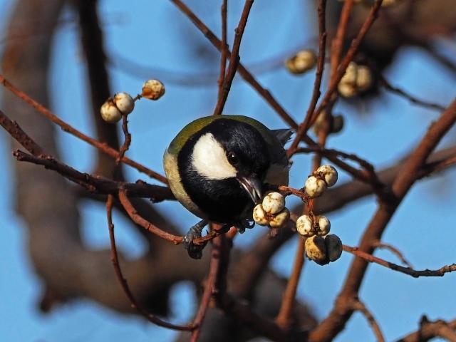 200104野鳥1