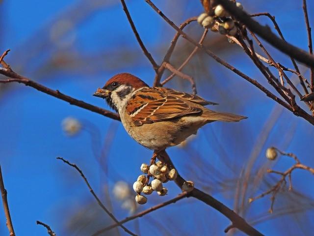 200104野鳥3