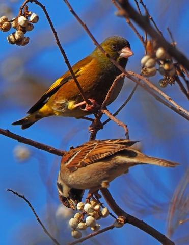200104野鳥4_1