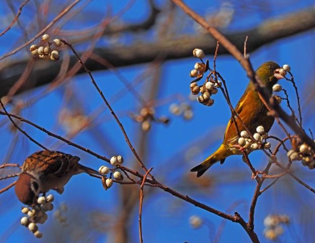 200104野鳥5