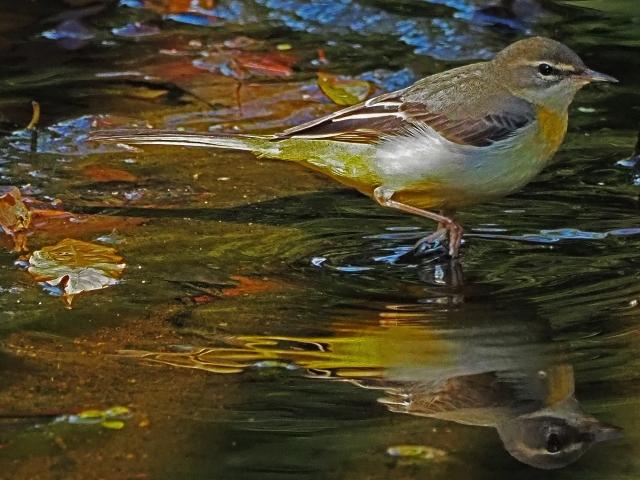 200104野鳥10