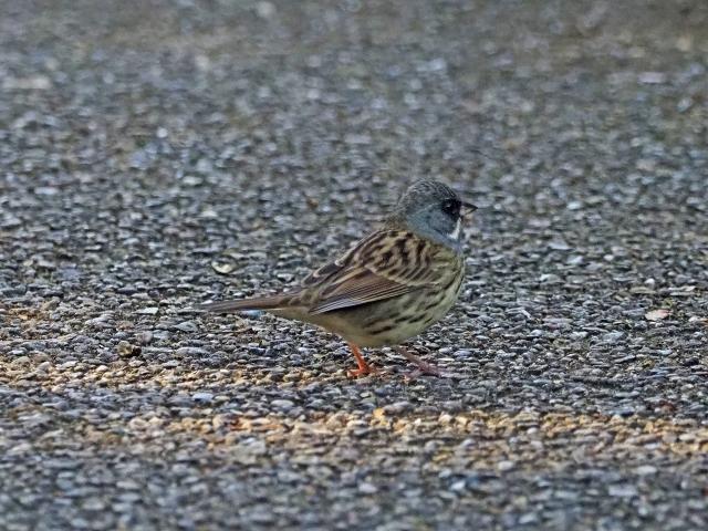 200104野鳥13
