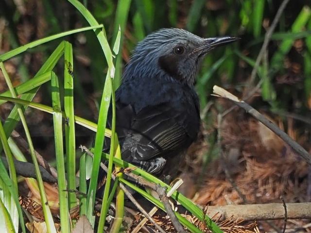 200104野鳥15