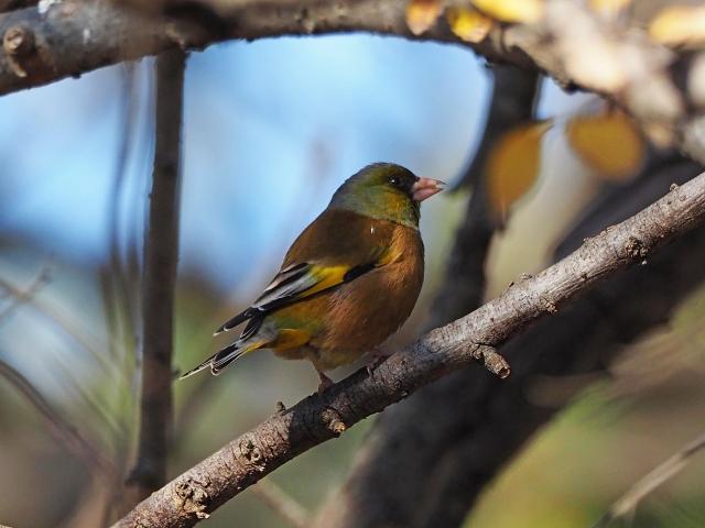 200104野鳥16