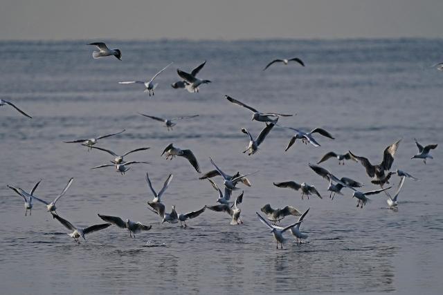 200307妻鹿漁港2