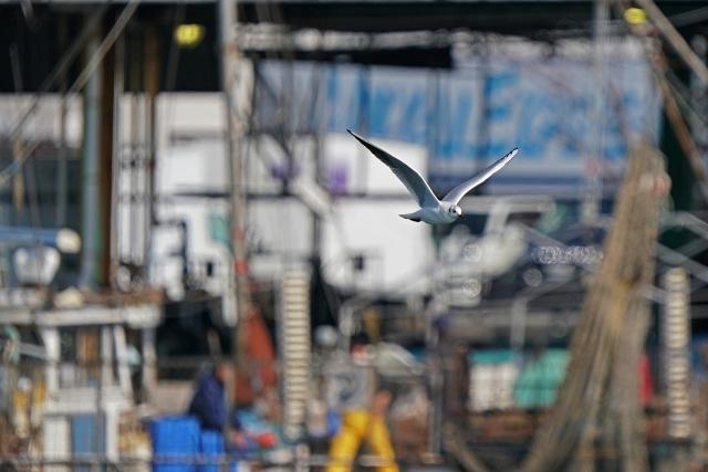 200307妻鹿漁港14