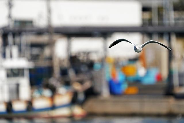 200307妻鹿漁港17