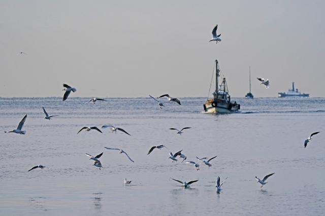 200307妻鹿漁港20