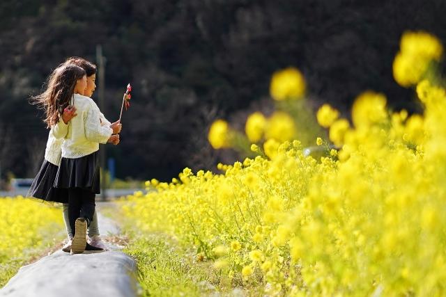200308菜の花畑6_3