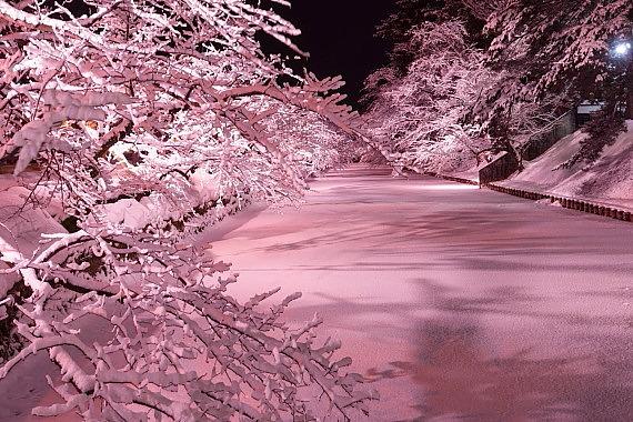 弘前城_冬桜