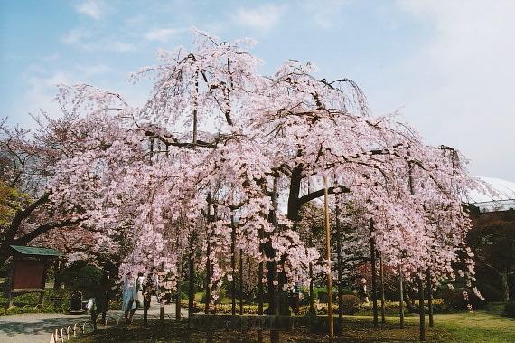 小石川後楽園03-0006