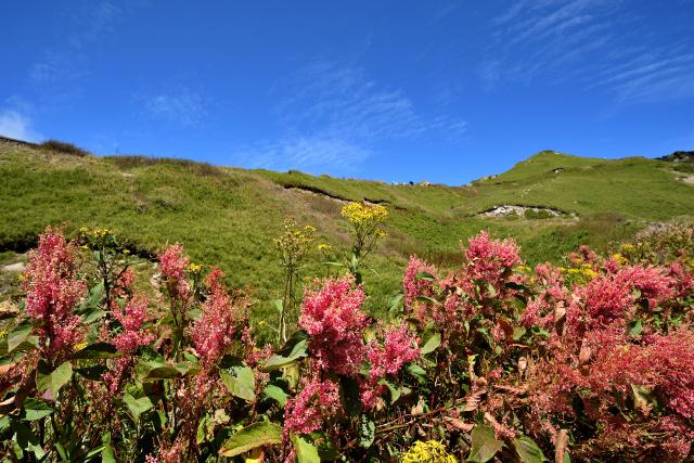 ベニイタドリが咲く山(4)