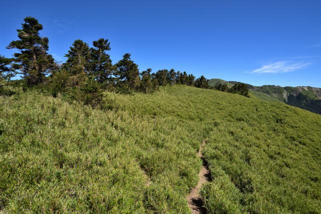 ベニイタドリが咲く山(2)