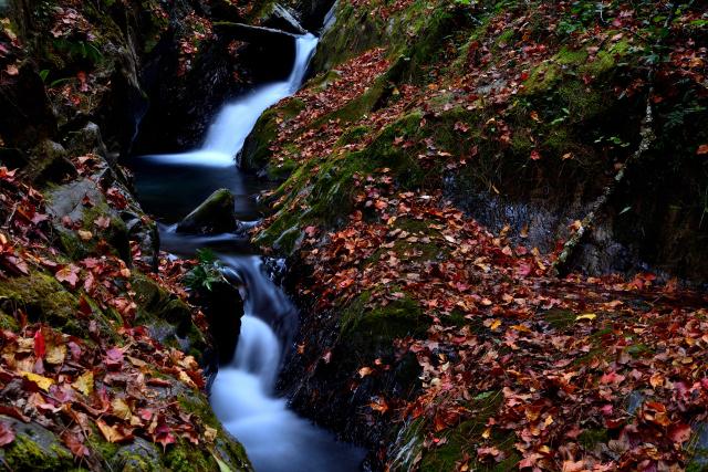 渓谷の秋(3)