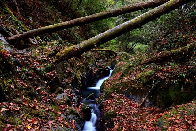 渓谷の秋(2)