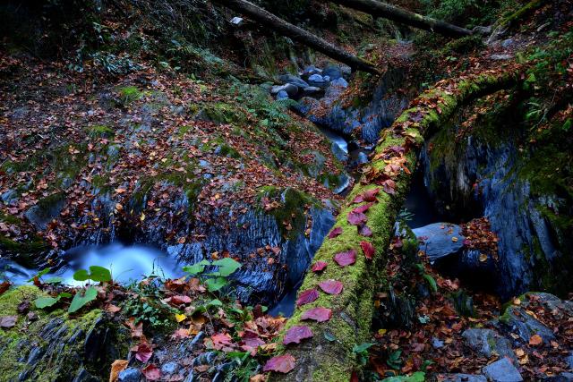渓谷の秋(1)