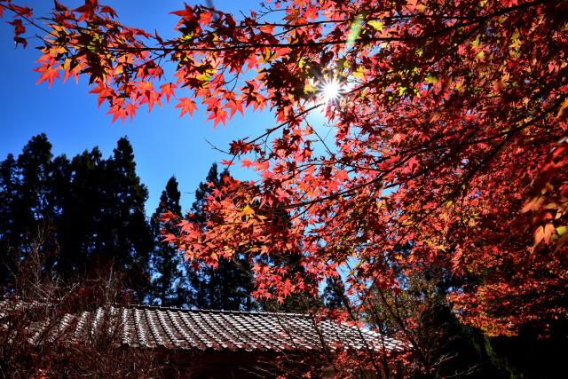 福壽山の紅葉(2)