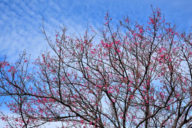 四季の移ろい(4)