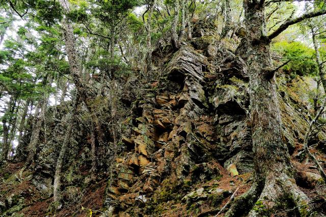 原生林の森(4)