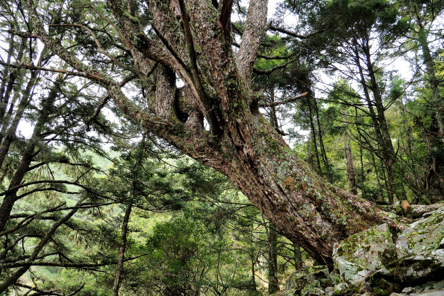 原生林の森(3)