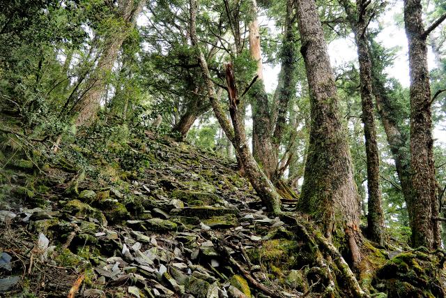 原生林の森(2)