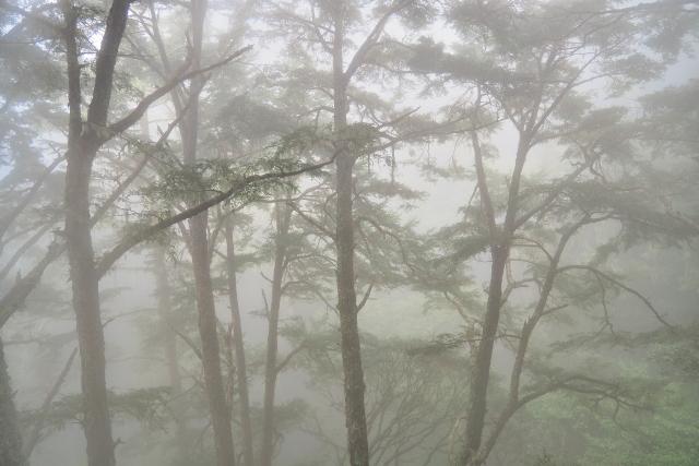原生林の森(1)