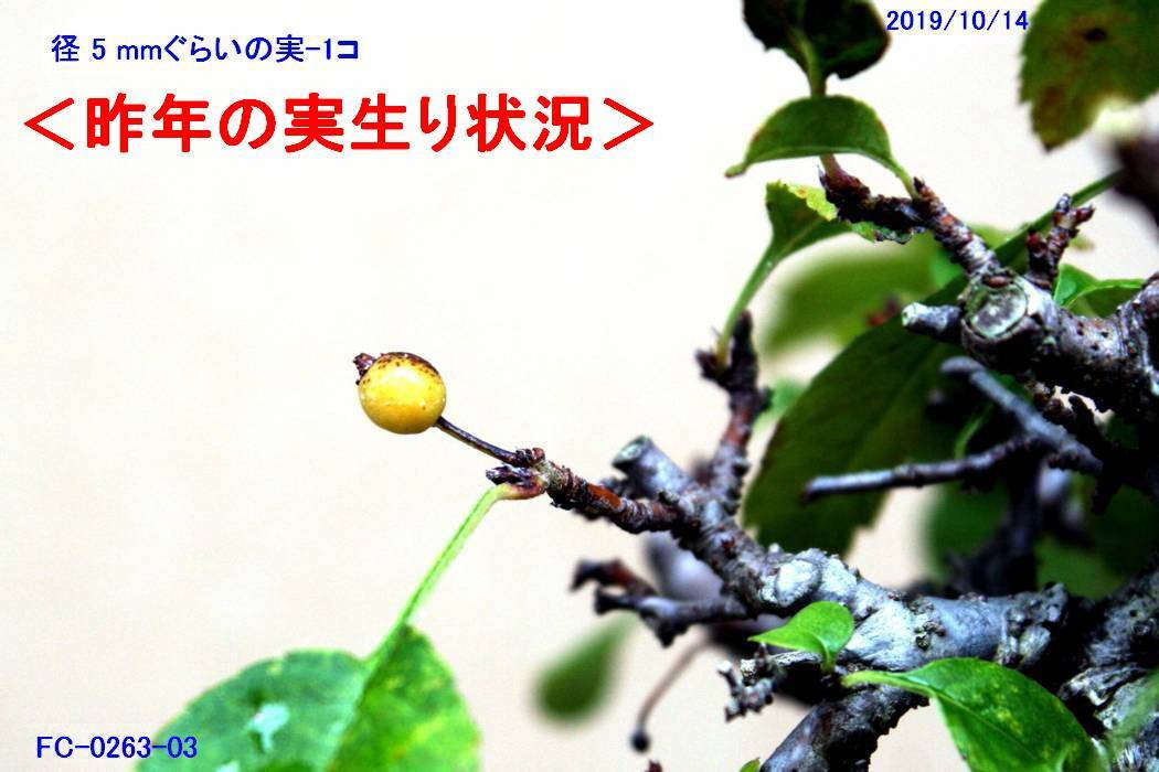FC0441-02.jpg